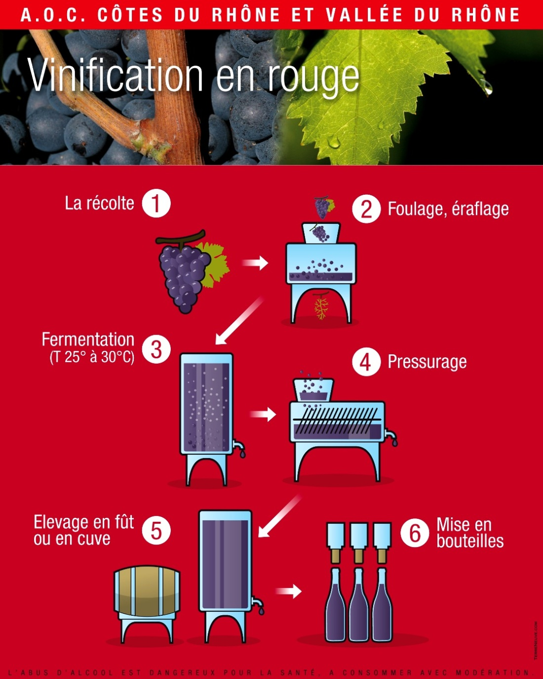 Vinification rouge jpg light