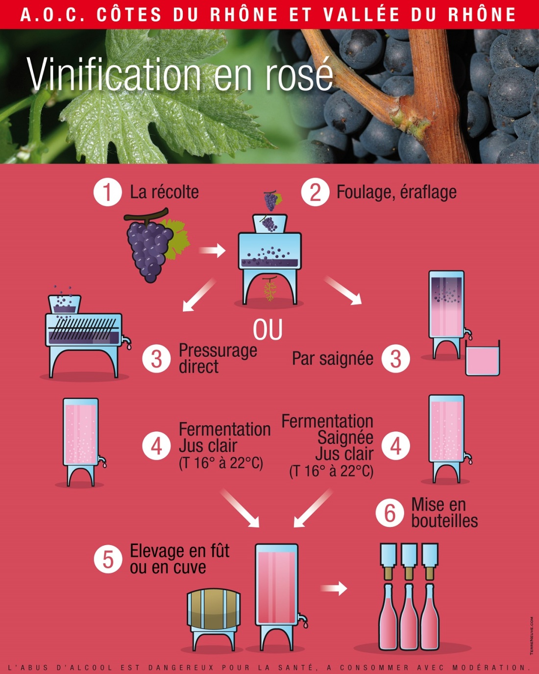 VinificationRosejpg